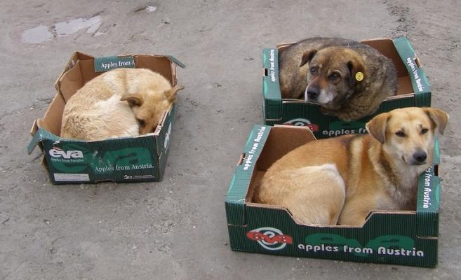 30 de parlamentari din toate grupurile politice au atacat la Curtea Constituţională proiectul de lege care prevede eutanasierea câinilor fără stăpân