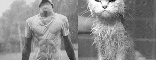 GALERIE FOTO: Oameni vs. pisici, în ipostaze foto asemănătoare