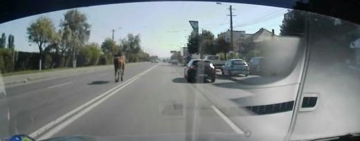 Un cal, la plimbare pe mijlocul străzii Aurel Vlaicu