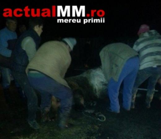 Sursă foto: ActualMM.ro