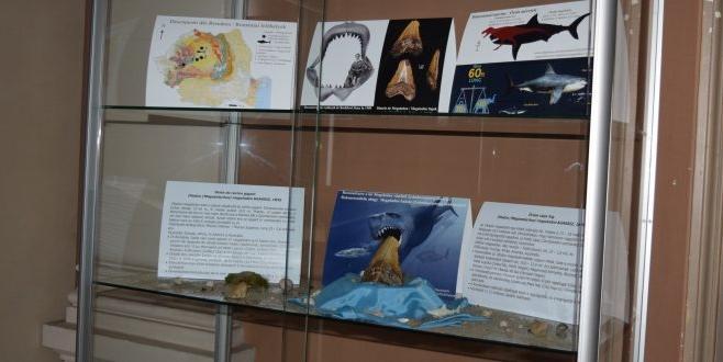 Secţia de Ştiinţele Naturii a Muzeului Judeţean Mureş, în cadrul proiectului