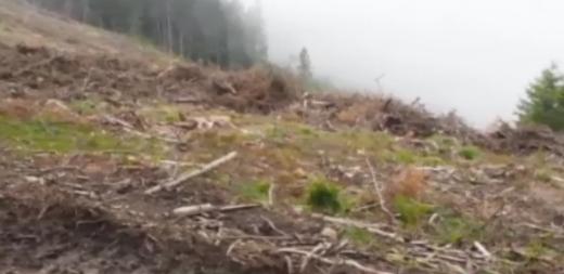 Clujul, în topul tăierilor MASIVE de copaci! Activiștii de la Greenpeace trag un semnal de alarmă, sursă foto: captură stirileprotv.ro