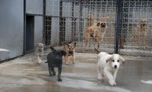 Vrei să adopți un cățel? Ziua porților deschise la Centrul de întreținere și adăpost câini fără stăpân