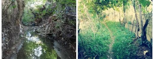 """Scurt """"concediu"""" în Mănășturul verde: """"Ne trebuie o formalizare a grădinăritului în Cluj-Napoca!"""""""