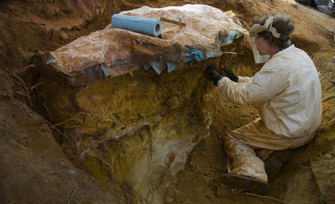 Şantier arheologic cu fosile