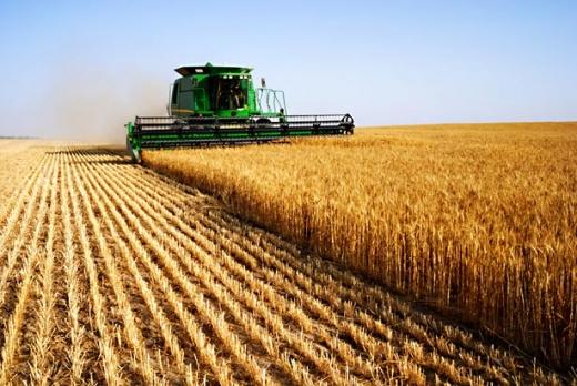 Producţia de cereale din acest an este foarte bună, însă va fi vândută la un preţ de nimic