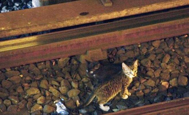 Două PISICI au oprit circulația metroului din New York