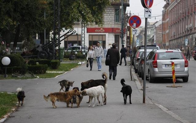 Câini comunitari