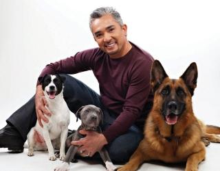Cesar Millan se implică în oprirea măcelului câinilor vagabonzi din România