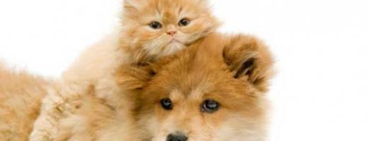 CE organizează o conferinţă dedicată bunăstării câinilor şi pisicilor din UE