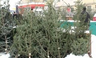 Peste 700 de brazi de Crăciun și sute de metri cubi de lemn, confiscați de polițiști, confiscați de polițiști