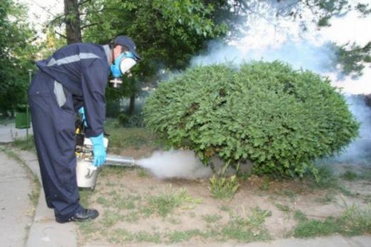 Primăria Cluj-Napoc începe a treia etapă de deratizare pe domeniul public
