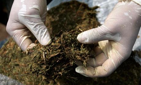 """Amfetamine, cannabis și hașiș, """"prada"""" polițiștilor clujeni în urma unor percheziții"""