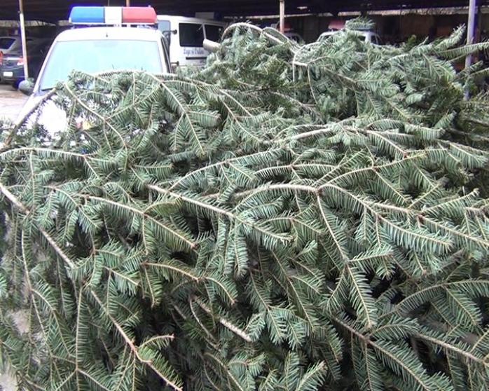 FOTO: Aproape O MIE de brazi de Crăciun, confiscați de polițiștii clujeni în două zile