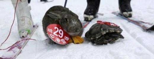 Cursă de schi pentru animale. Foto: Mediafax