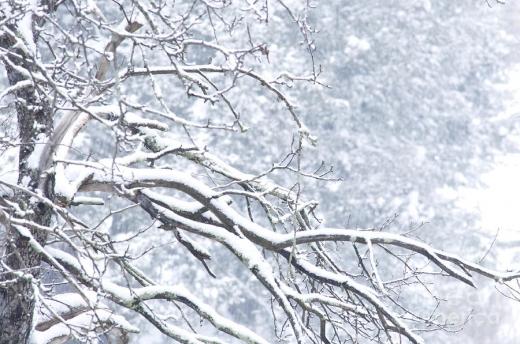 Vine FRIGUL. Vezi cum va fi vremea la Cluj în următoarele săptămâni!