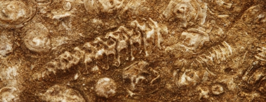 Specialiștii clujeni pregătesc prima expoziție din România cu reconstituiri elaborate ale unor dinozauri, care au fost descoperiți în zona Hațeg