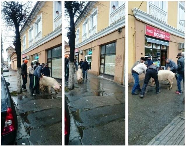 sursa foto: groparu.ro