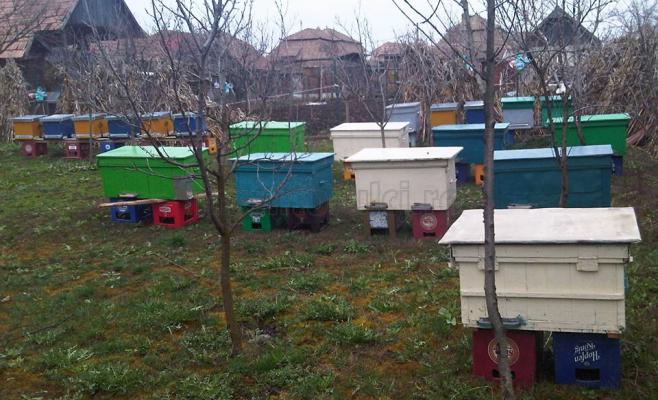 Apicultorului i-au decedat şapte familii de albine.