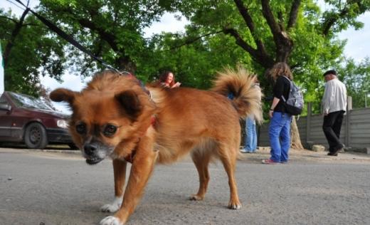 Consilierul local care voia să taie corzile vocale câinilor are o nouă idee