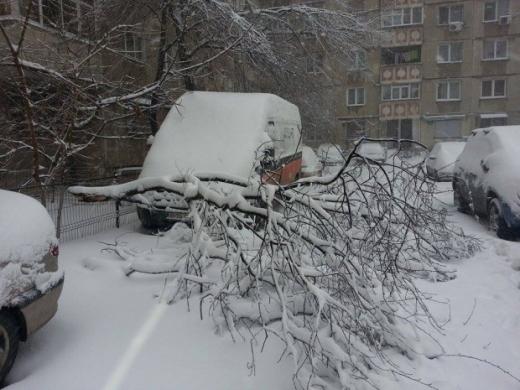 Trei mașini au fost avariate după ce au căzut copaci pe ele. Sursa foto: stirileprotv.ro