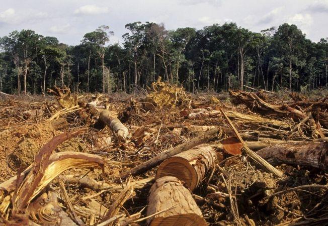 Defrisari în pădurile tropicale