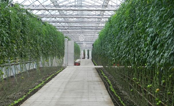 Spania e recunoscuta in lume pentru productia de legume