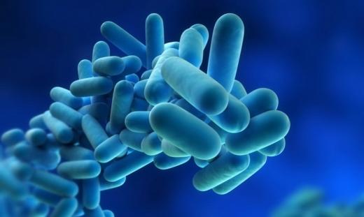 Probioticele luate de persoanele cu alimentatie sanatoasa pot avea efecte negative asupra memoriei