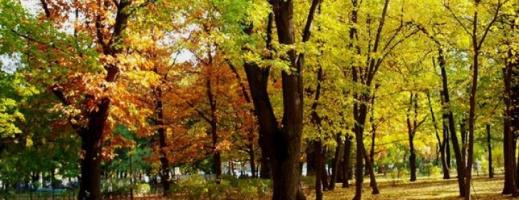Vremea se va răci în următoarele zile. Precipitații prognozate în toată țara între 27 și 30 octombrie
