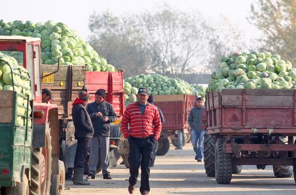 România, pe primul loc în Uniunea Europeană la ponderea populaţiei care lucrează în agricultură