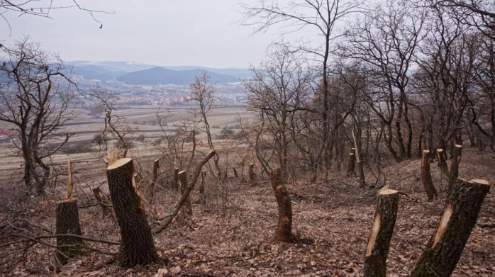 Sursă foto: The Hoia-Baciu Forest - Truth or Legend?