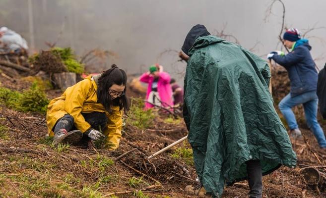 Membrii MOX și voluntari au plantat puieți la Valea Drăganului