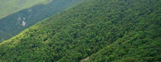 Parcurile naționale ale țării, monitorizate online: hărți digitale și interactive pentru public
