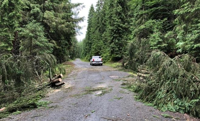 """FOTO SPECTACULOS Prăpăd pe """"Transursoaia"""", copaci căzuți la pământ, grindină de proporții"""