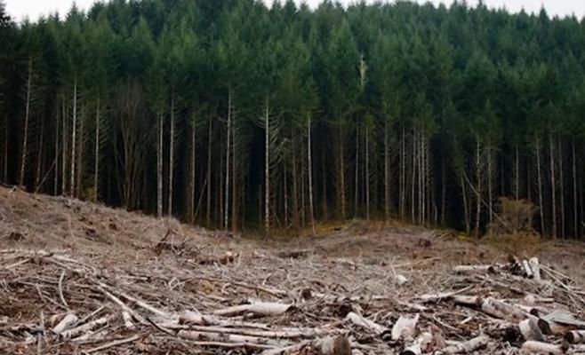 """Clujenii se alătură mișcării mondiale pentru mediu: """"Criza climatică, subiectul nr. 1 al secolului XXI!"""""""