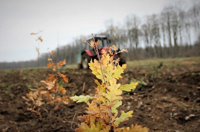 2 miliarde de puieți forestieri plantați în trei decenii, sursă foto: Romsilva
