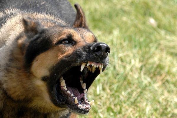 Interzicerea accesului câinilor agresivi în spații publice fără botniță și lesă, CONSTITUȚIONALĂ