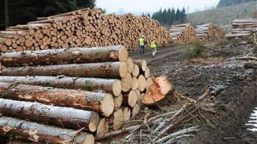 Clujul, CAMPIOANĂ la infracțiuni de natură silvică! Județul este în frunte la tăierile ilegale