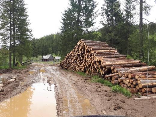 Garda Forestieră Cluj: 5.700 de copaci tăiați ilegal. S-a încercat blocarea controalelor!, sursă foto: arhivă
