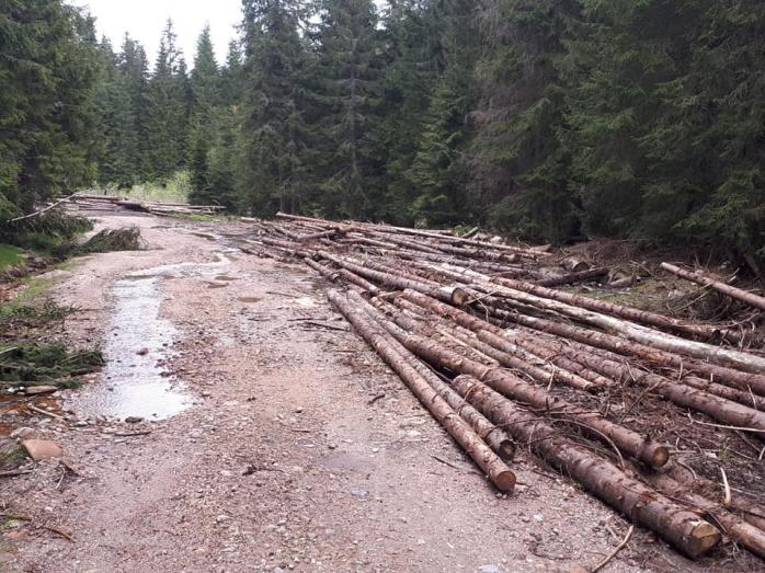 Lupta pentru păduri! GPS pe camioane, fotografii din satelit, exportul de bușteni în afara UE, INTERZIS