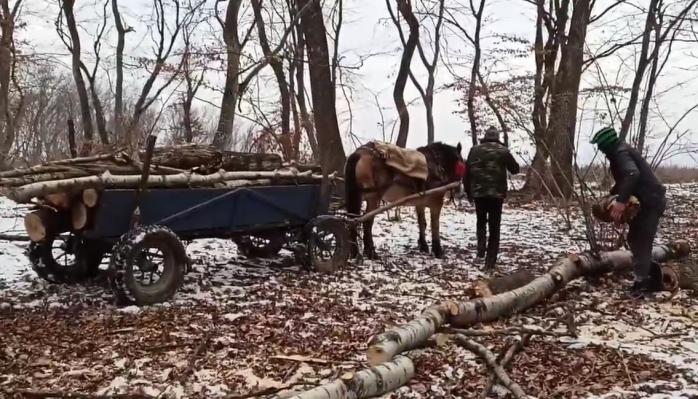 Hoți de lemne, prinși în flagrant de clujeanul care se pregătește de cursa vieții?, sursă foto: Facebook Vlad Crișan Pop