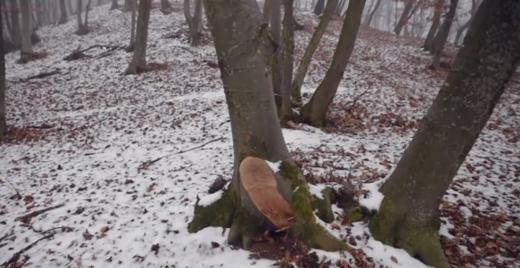 """Sătui de tăierile din Pădurea Florești-Tăuți, clujenii sunt încurajați să """"bombardeze"""" cu sesizări, sursă foto: captură video Facebook Adrian Dohotaru"""