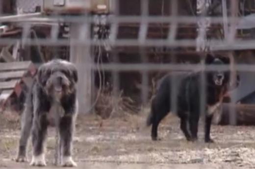 Asia de Gilău! Vietnamezii de la o fermă de pui, acuzați că se înfruptă din câinii sătenilor