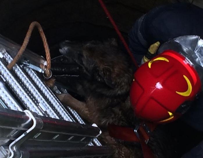 Cățel căzut în puț, salvat de pompierii clujeni