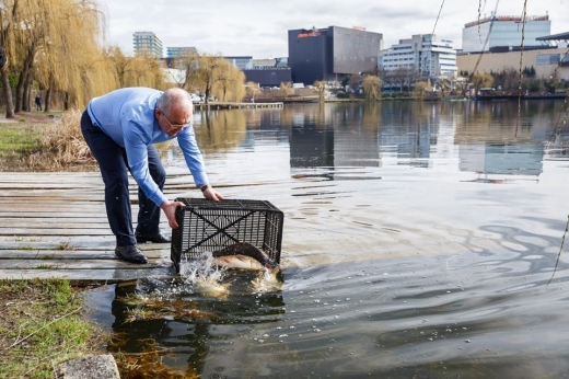Boc, pescarul. Primarul a pus umărul la popularea cu pește a lacurilor din Gheorgheni, sursa foto: Facebook Emil Boc