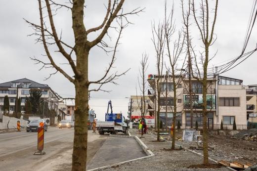 Decizie neinspirată? A început plantarea arborilor cu balot în Bună Ziua. În mijlocul trotuarului!