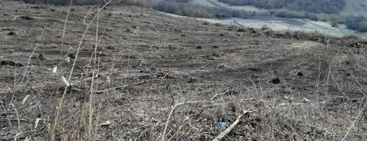 """Noi tăieri masive în Pădurea Hoia-Baciu? """"E hilar că primarul Șulea s-a înscris la ecologiști!"""""""