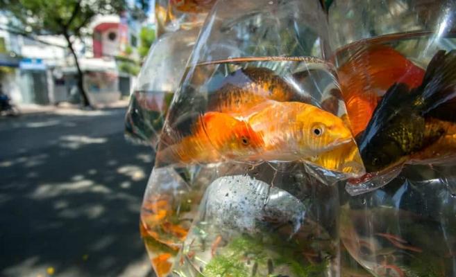 Foto: fishtankmaster.com
