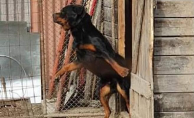 Un clujean și-a legat câinele și a plecat de acasă. Animalul era la un pas să se sufoce!