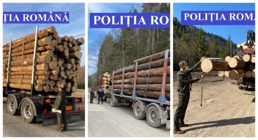 """""""Aerul"""" Clujului, încărcat în camioane. Polițiștii au verificat zeci de transporturi de lemne, sursă foto: IPJ Cluj"""